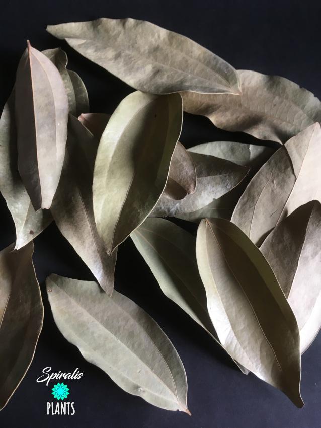 Cinnamon leaves pack natural terrarium vivarium decor leaf litter