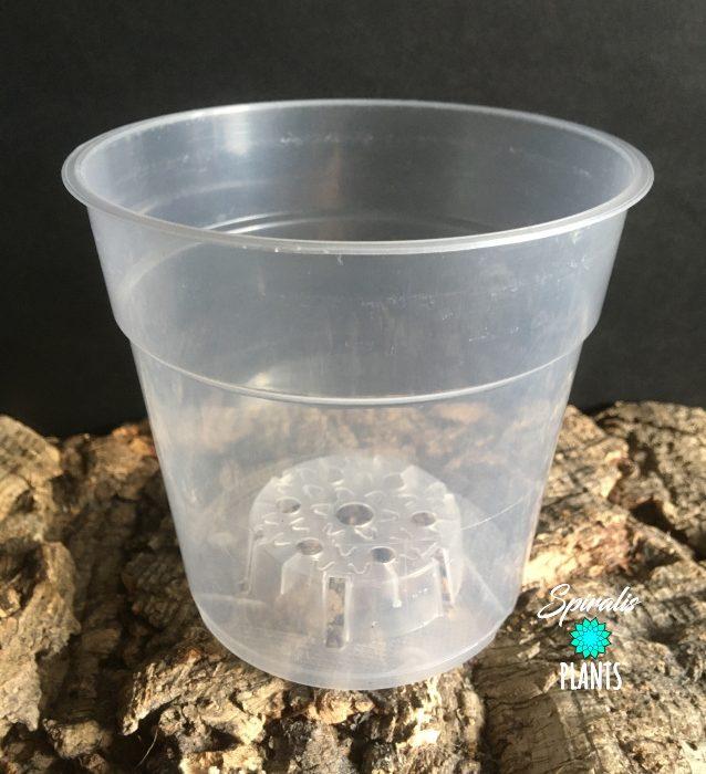 Clear plastic orchid plant pot