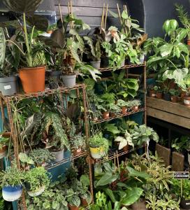 Spiralis Plants House Plant Shop Falmouth Cornwall3