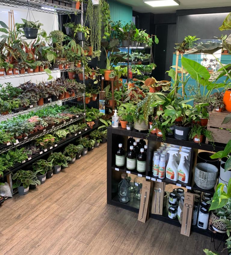 Spiralis Tropical House Plants & Terraria Shop Falmouth (10)