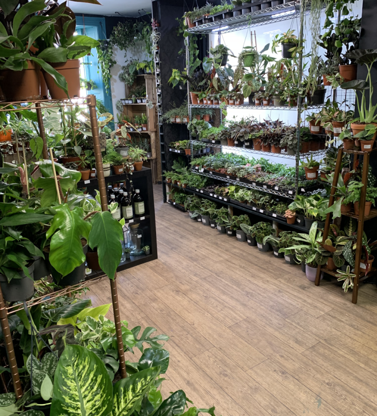 Spiralis Tropical House Plants & Terraria Shop Falmouth (4)