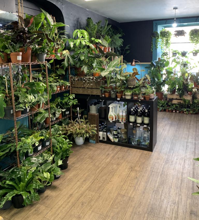 Spiralis Tropical House Plants & Terraria Shop Falmouth (5)