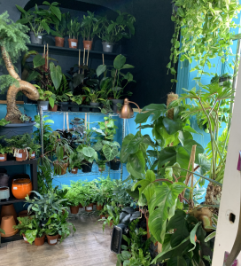 Spiralis Tropical House Plants & Terraria Shop Falmouth Cornwall