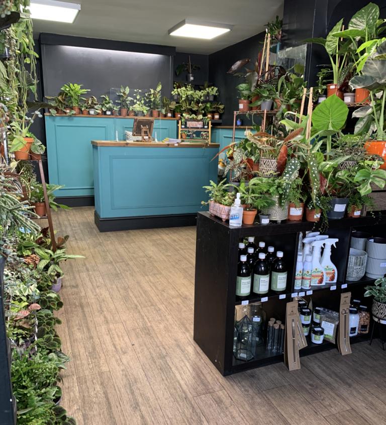 Spiralis Tropical House Plants & Terraria Shop Falmouth Cornwall (7)