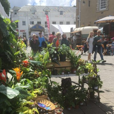 house plant market stall spiralis plants falmouth