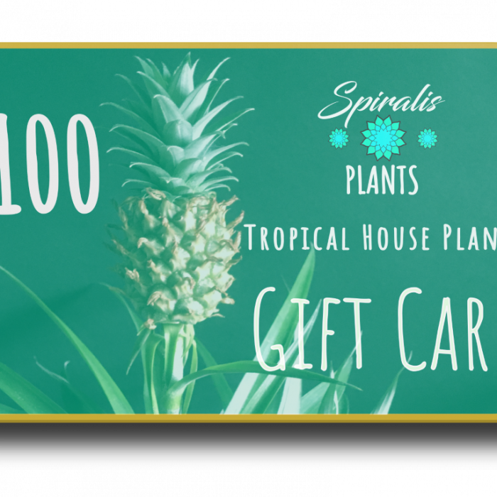 Online House Plant Gift Card Voucher £100