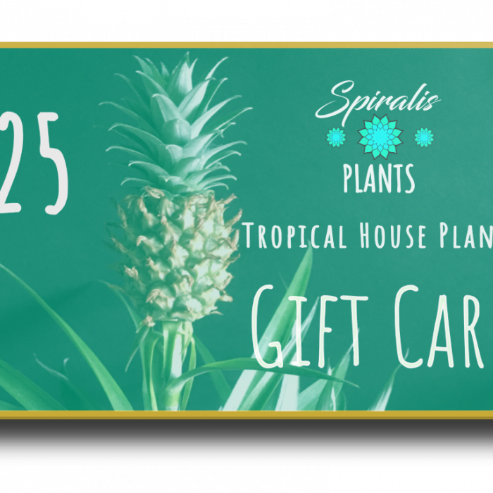 Online House Plant Gift Card Voucher £25