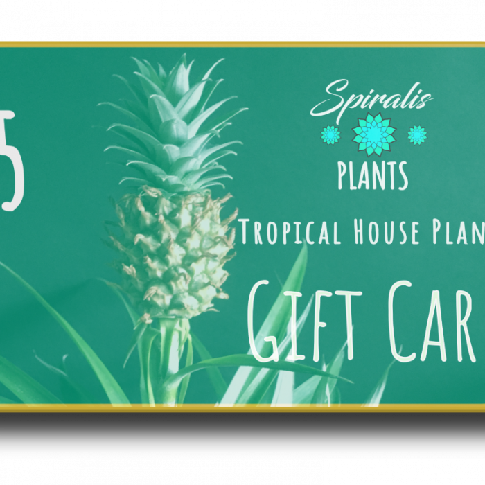 Online house plant gift card voucher £5