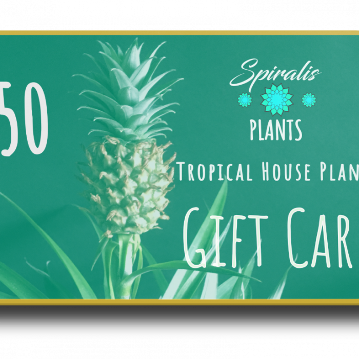 Online House Plant Gift Card Voucher £50